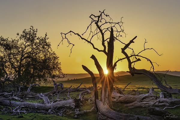 The Boneyard, Central California