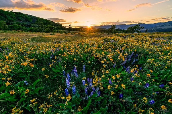 Spring Wildflowers, Rowena Crest, Oregon