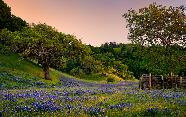 Spring Evening, Monterey County