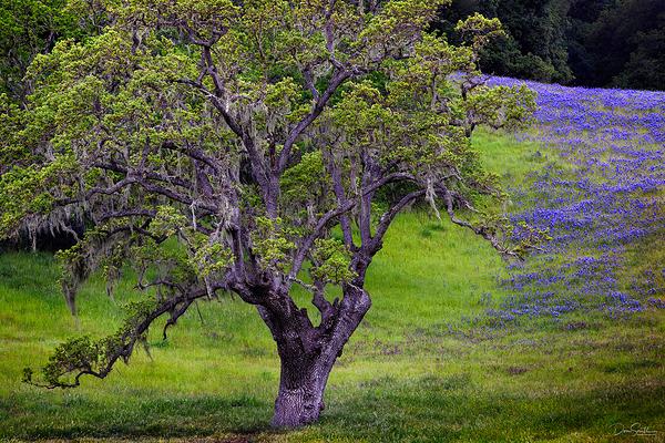 Springtime in Carmel Valley