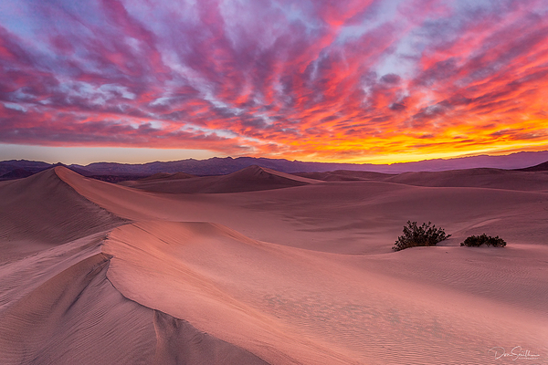 Dawn on Mesquite Dunes, Death Valley NP