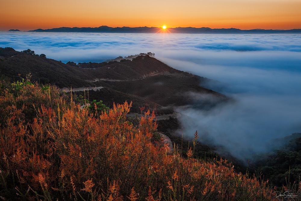 Morning Fog, Santa Clara Valley, California