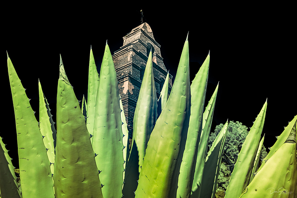 Agave and San Miguel Mission Bell Tower