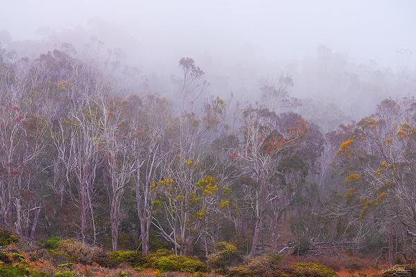 Foggy Morning Along Central Coast, California