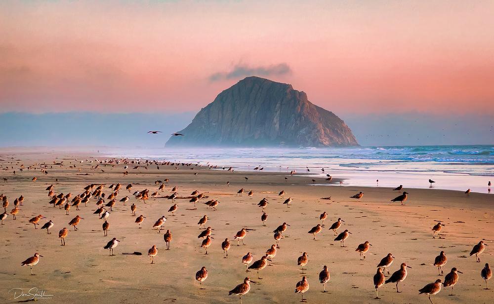 Morro Strand State Beach, Morro Bay, CA