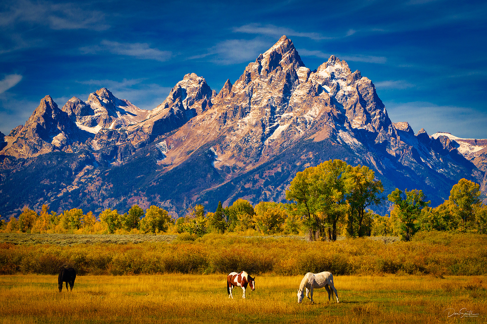 Grazing... On A Sunny Afternoon - Grand Teton NP