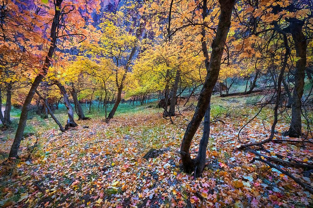 Fall in Zion Canyon, Utah