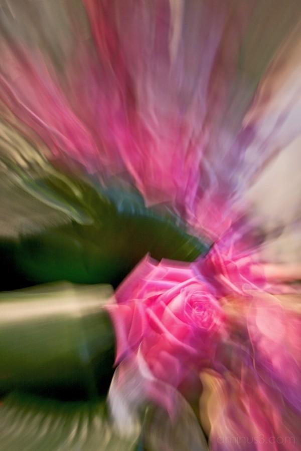 temps de flors'05