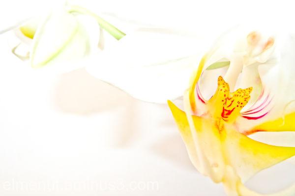 orquidia