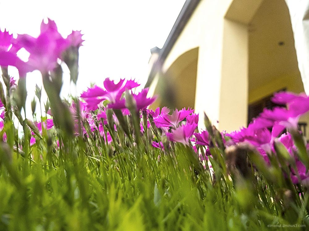 argelaguer flors