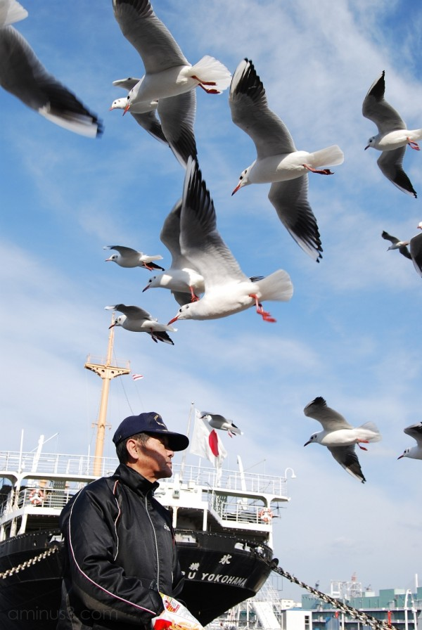 Seagulls at Yamashita Park