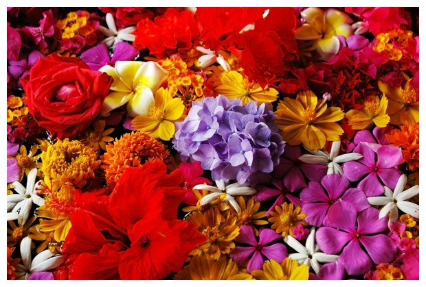 Flowers from Kerala for my B-day !