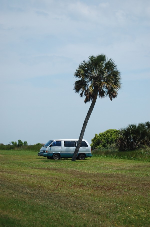 Palm tree parking