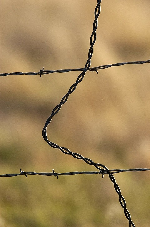 Rusty bard wire fence