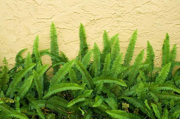 ferns, colors, patterns