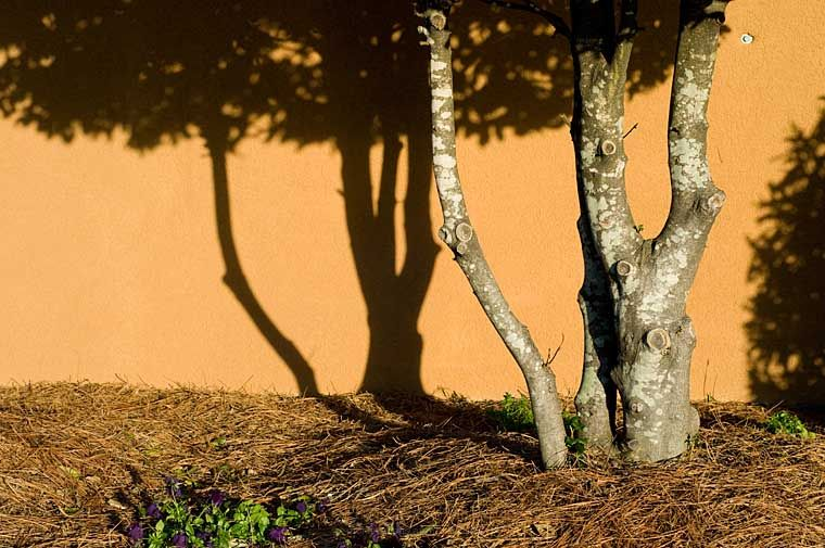 The Trees Shadow