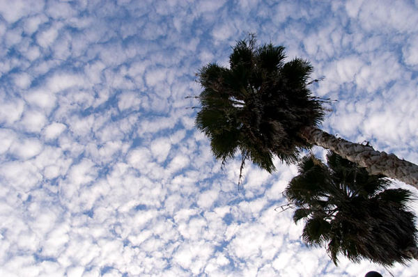 Clouds and Palms