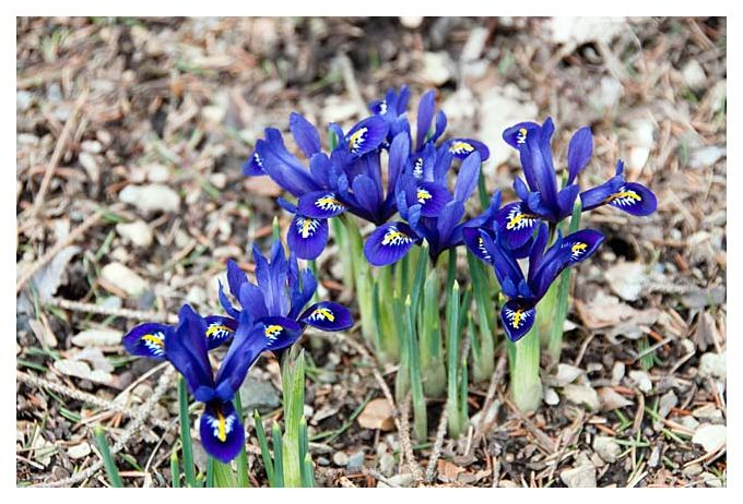 New Spring Flowers 2