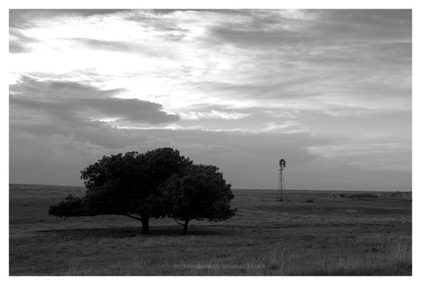 Trees and windmill near Follett, Texas