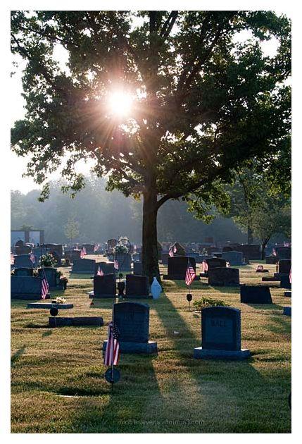 Starburst through tree at cemetery