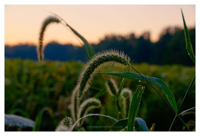 Morning Dew and Sunrise