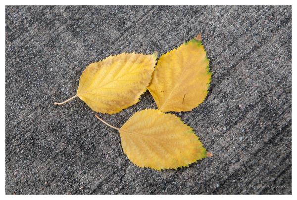 Three Leaves