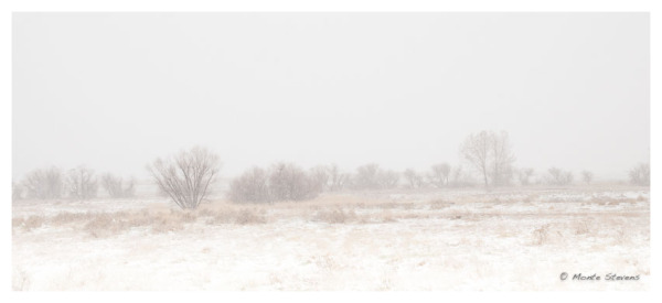 A Quiet Snowfall