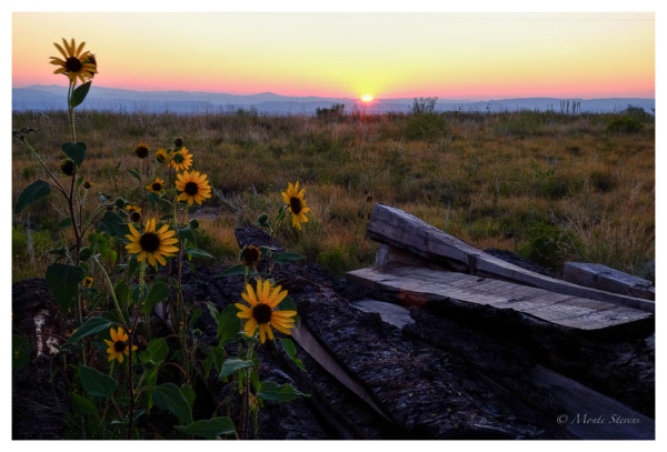 Sunset at the wood pile
