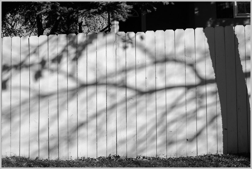 Shadows Cast Against the Fence