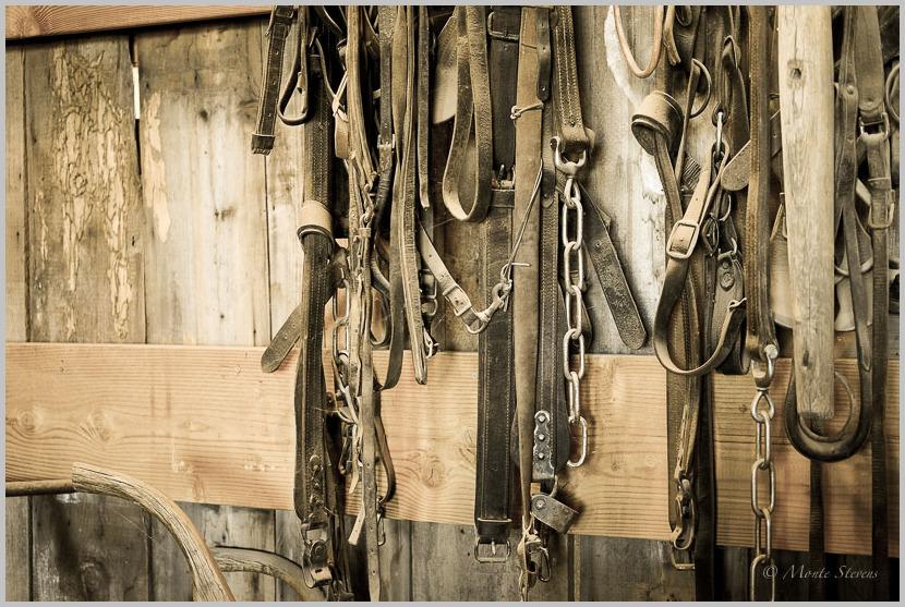 Leather in Old Barn