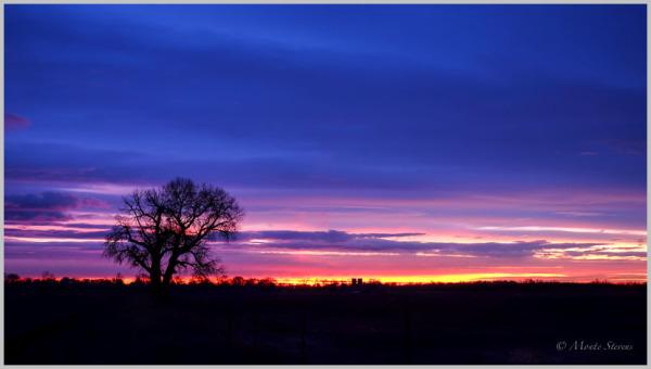 Tree Greeting the Sunrise