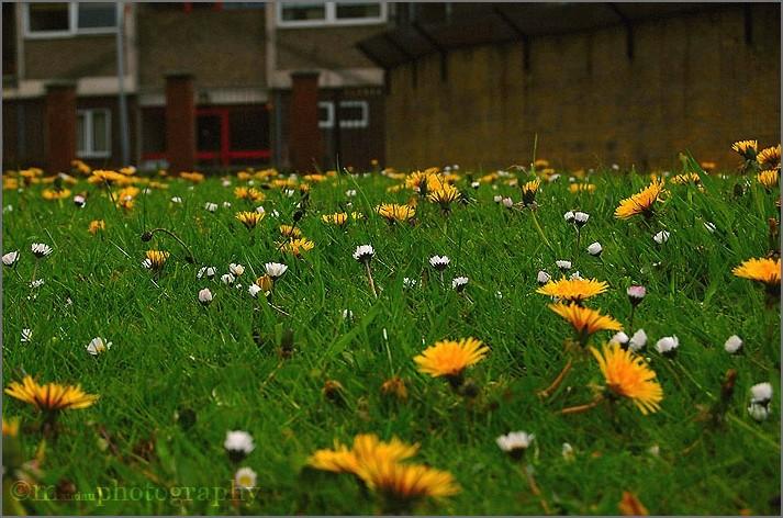 wildflower | mybackyard