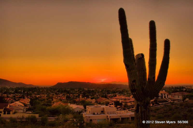 56/366 Cactus Sun