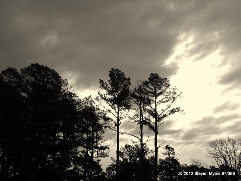 67/366 Pine tops
