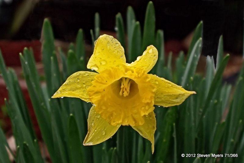 71/366 Springtime Showing