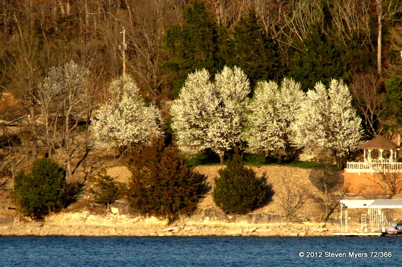 72/366 Spring Showing