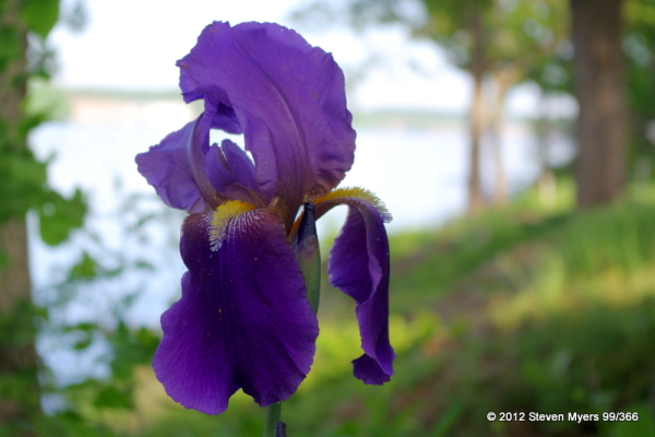 99/366 Flowering Spring