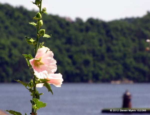 152/366 Flower