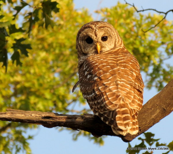 235/366 Who Who Owl