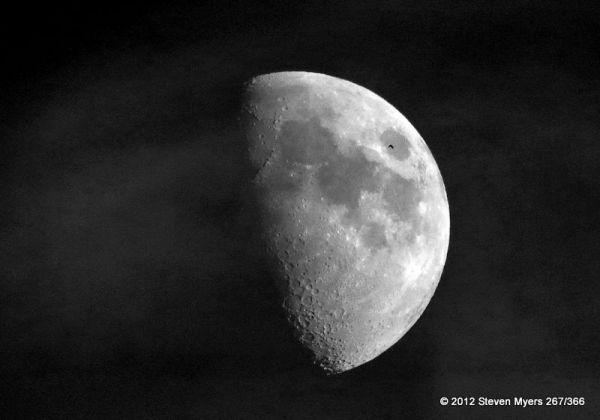267/366 Moon and Bird