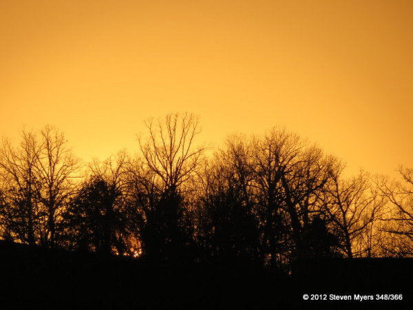 348/366 Sunset Trees
