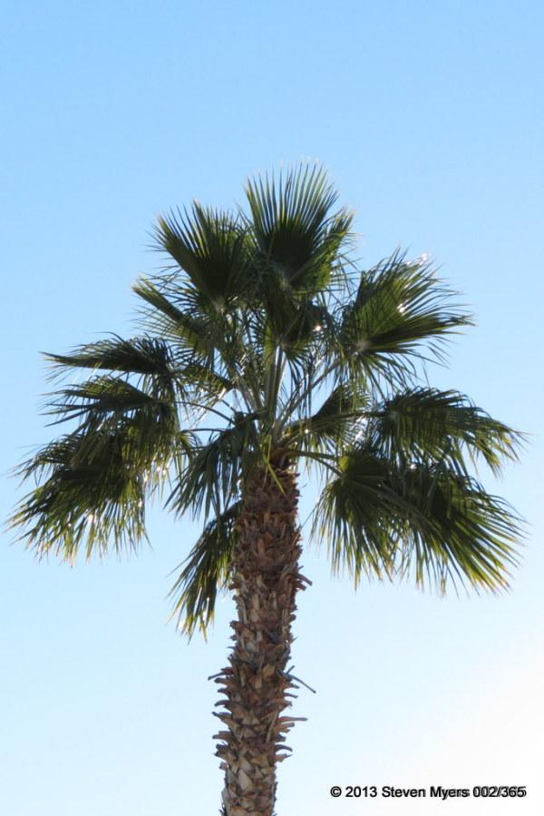 002/365 Glittering Palms