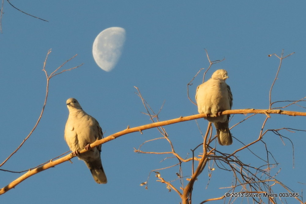 003/365 Birds and Moon