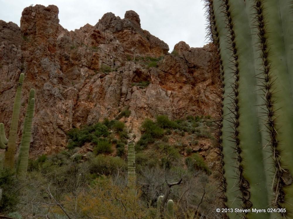 024/365 Cactus Viewing