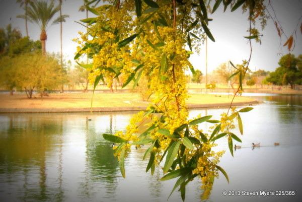 025/365 Lake View