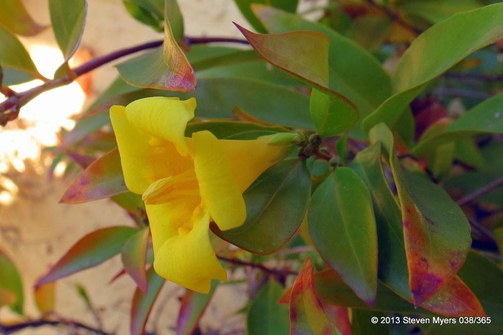 038/365 Flowers in the Desert