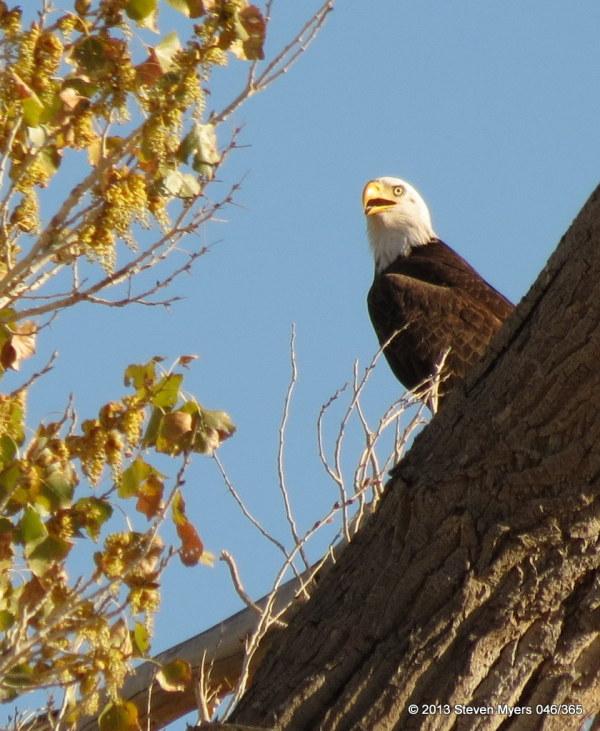 046/365 Eagle Guard