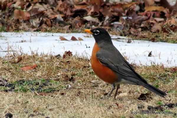 067/365 Robin Returns
