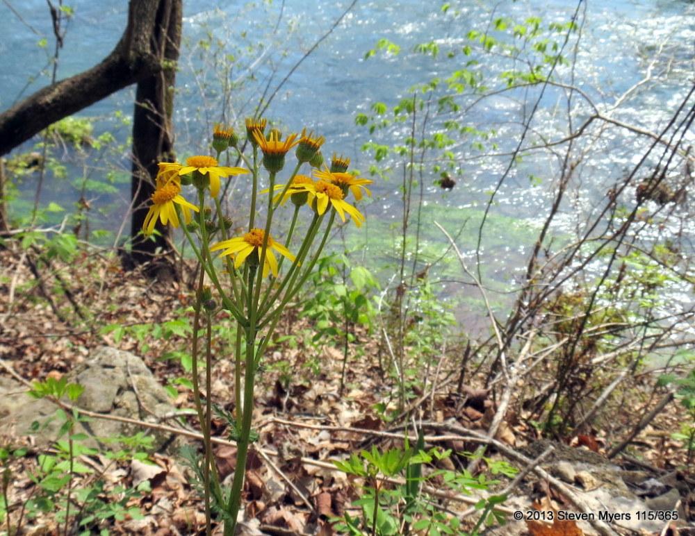 115/365 Wildflowers
