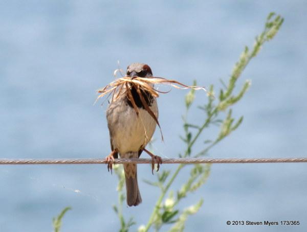 173/365 A Mouthful of Nest